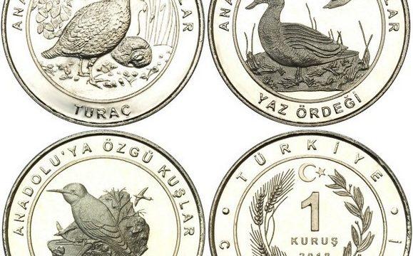 Turchia, monete per gli uccelli dell'Anatolia