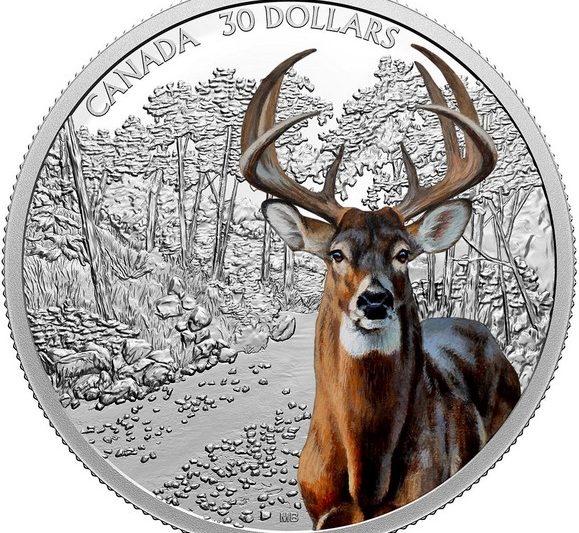 Canada, moneta per il cervo dalla coda bianca